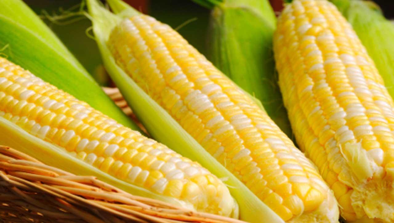 Mais ist glutenfrei – Trotzdem nicht Paleo?