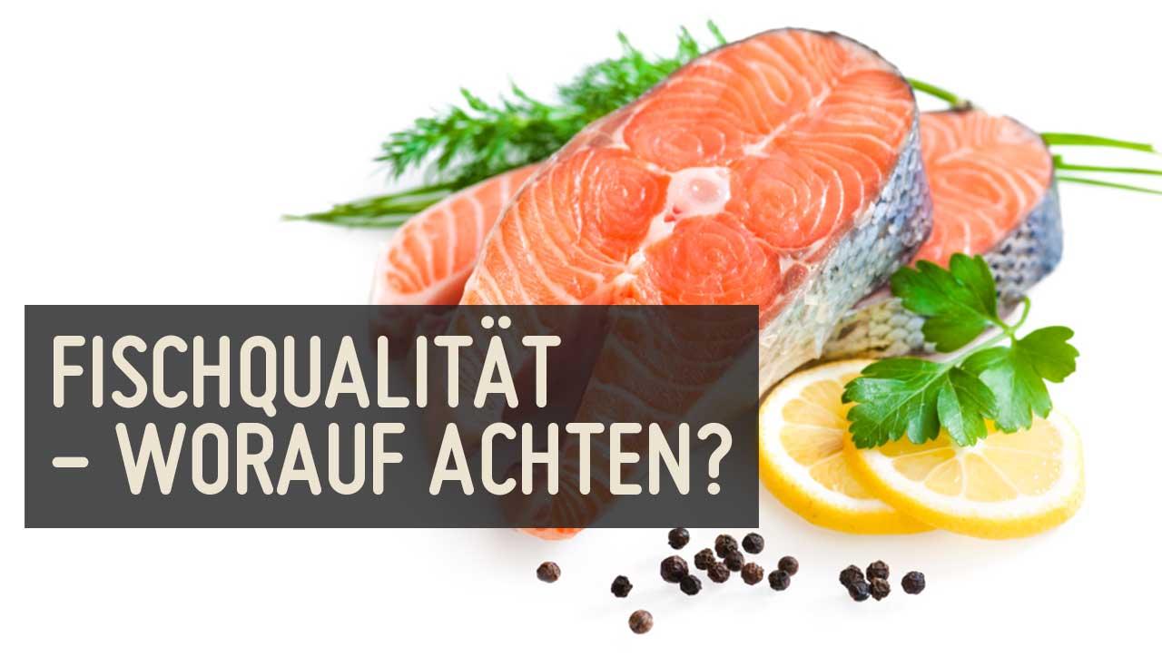Fischqualität – worauf soll ich achten?