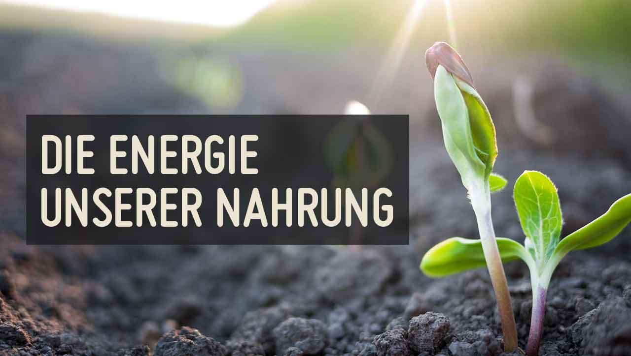 Alles fängt mit einem gesundem Boden und nachhaltigem Anbau an.