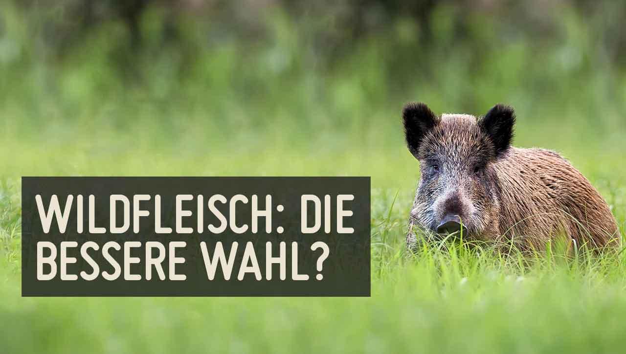 Ist Wildfleisch besser für Mensch und Umwelt?